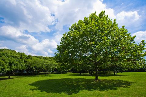 ○●青空の下でヨガランチ●○  ~緑豊かな城址公園で自然の恵みに包まれながらリフレッシュ~